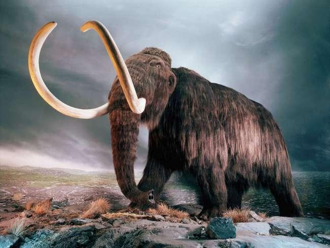 Новосибирец вырезал микроскопическую фигурку мамонта на срезе волоса древнего животного. ФОТО (видео)