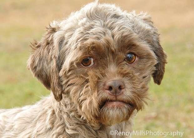 Обнаружен уникальный пес с человеческим лицом (3 фото)