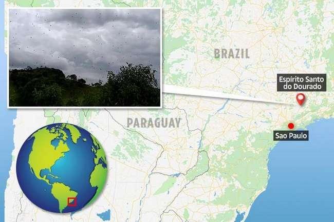 Дождь из пауков в Бразилии