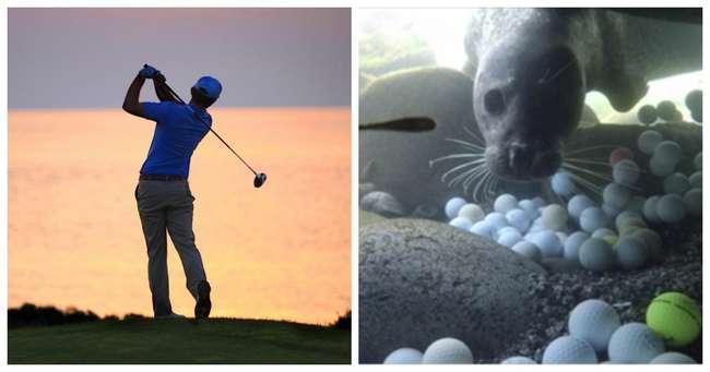 Фридайверы выловили из океана несколько десятков тысяч мячей для гольфа