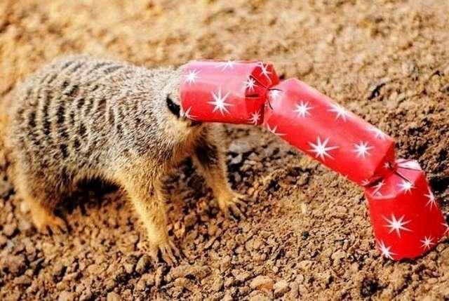 20 забавных животных, которые попали в затруднительные ситуации