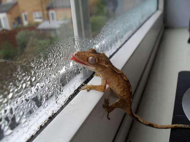 25 животных, которые лижут окна — и крадут наши сердца!