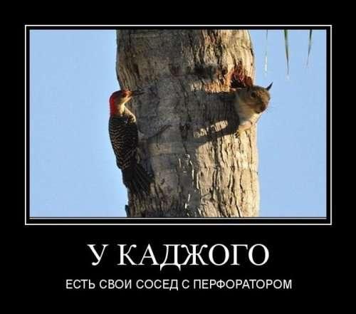Демотиваторов сборник (11 шт)