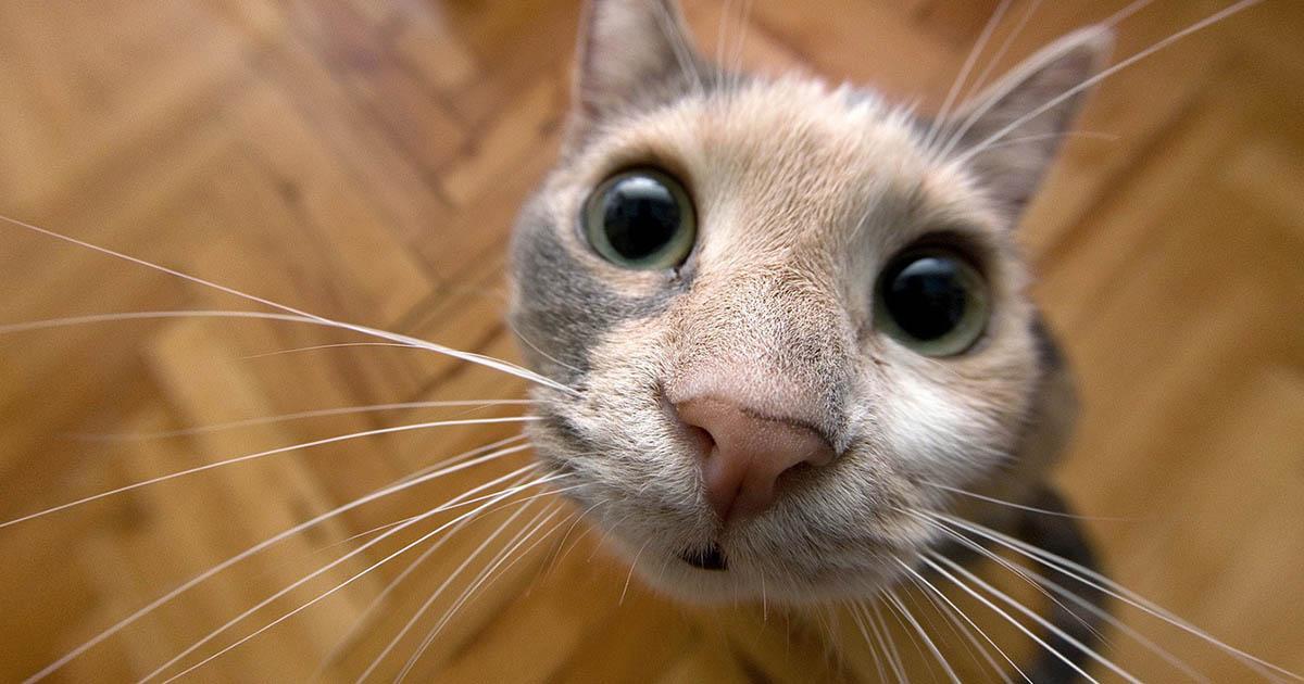 Почему кошки делают все то, что делают