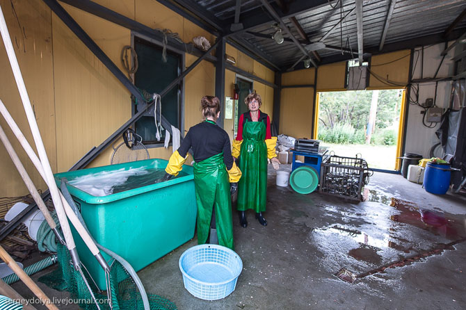 Рыбное производство на Камчатке (30 фото)