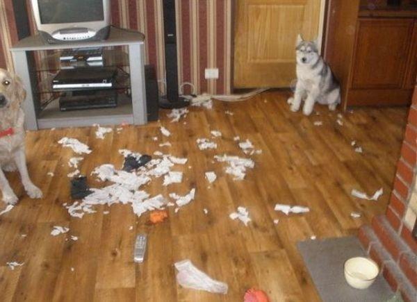 -Купи собаку!- говорили они...
