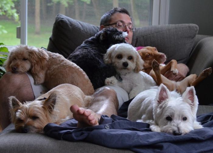 Научно подтвержденные причины завести собаку (10 фото)