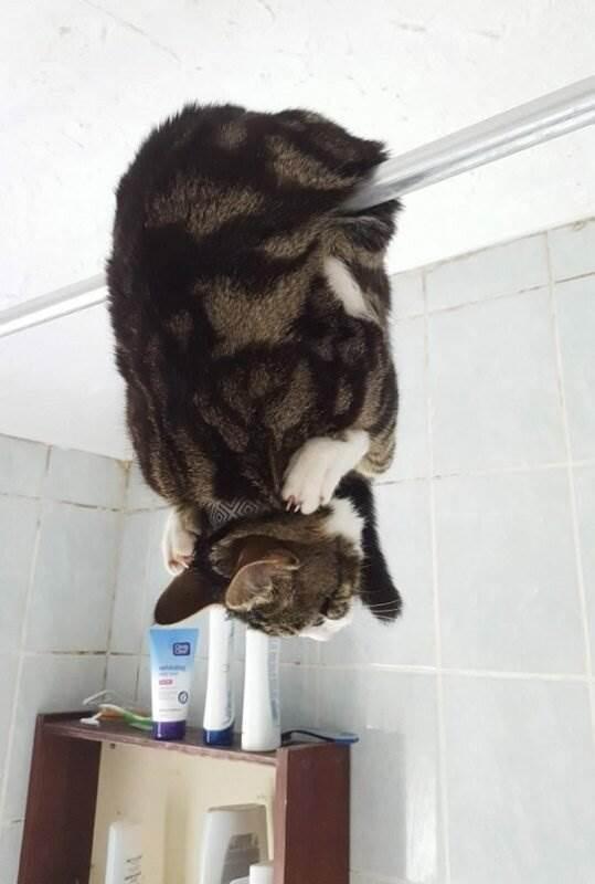 -О таком даже стыдно вспоминать!-: позорные моменты озорных котиков ( 18 фото )