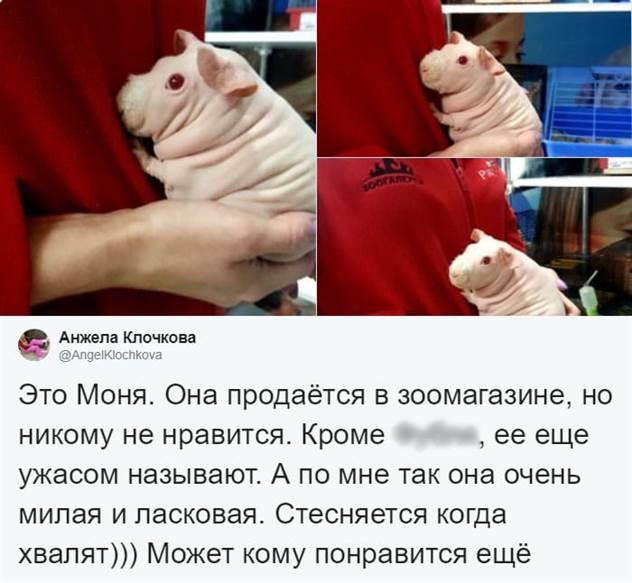 -Шладкая штесняшка-: страшненькую морскую свинку никто не любил, пока в дело не вмешался Твиттер ( 16 фото )