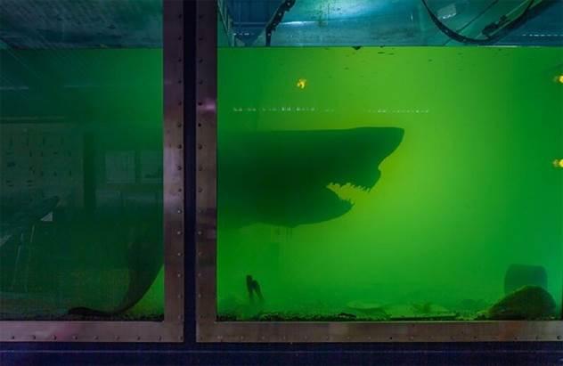 Кому нужна акула в формальдегиде? ( 7 фото )