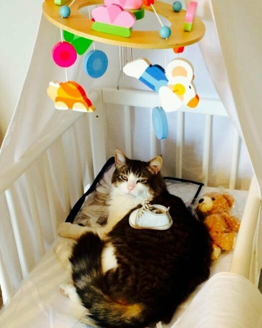 Если не кошки хозяева в доме, то кто?!(19 фото)