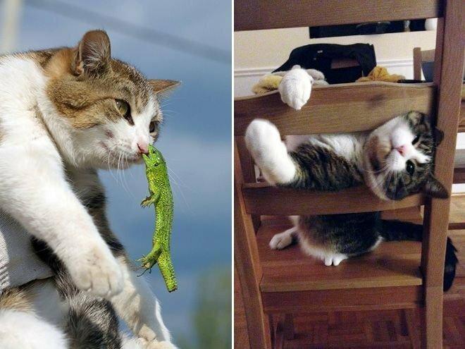 Смешные неудачи котэ (18 фото)