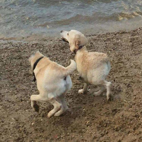 20 смешных панорамных фото с собаками (20 фото)