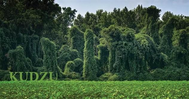 Семь растений, которые могут запросто получить главную роль в фильме ужасов ( 8 фото )