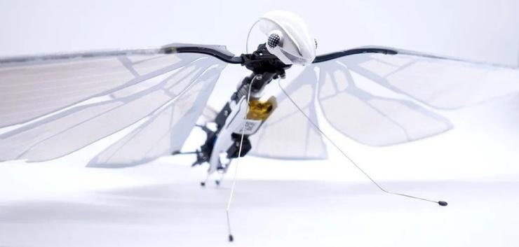 Летающий робот-стрекоза MetaFly (2 фото + видео)