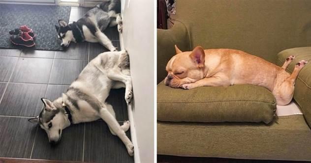 20+ фото собак, которые не стесняются своих странностей ( 21 фото )