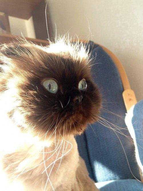19 убедительных фотографий, доказывающих, что кошки — настоящие королевы драмы