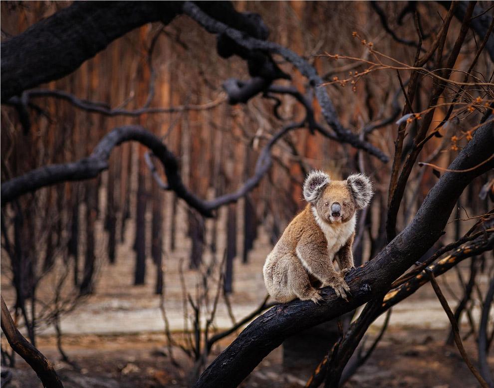 Призеры фотоконкурса BigPicture Natural World Photography 2018