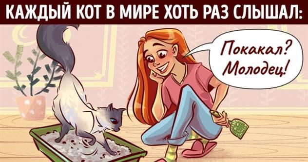 16 ритуалов, которые совершает каждый котовладелец ( 17 фото )