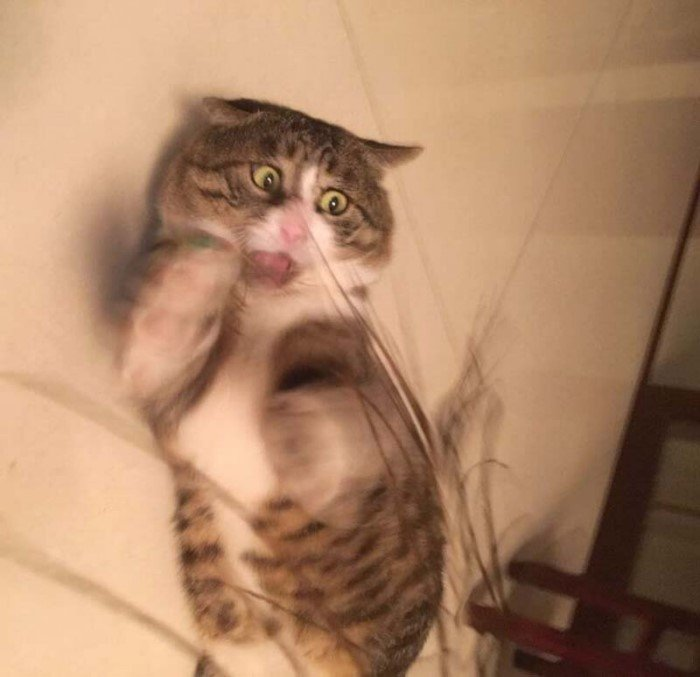 Этот эмоциональный кот просто «король драмы»