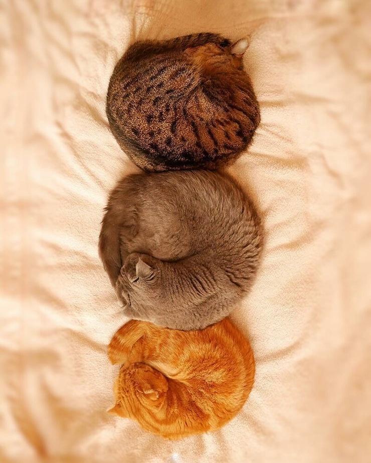 Кошки, спящие в разных позах (20 фото)