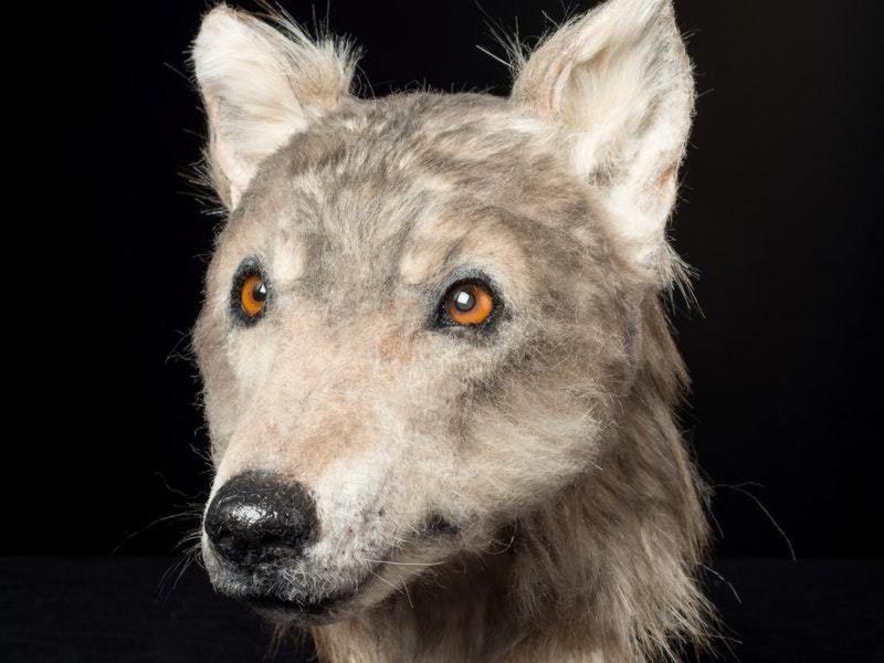 Как выглядели собаки 4500 лет назад