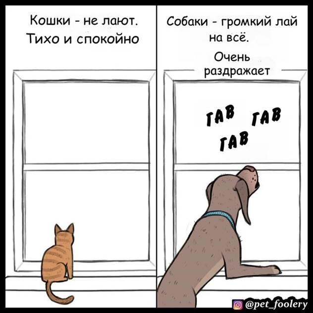 Кошки v/s собак ( 6 фото )