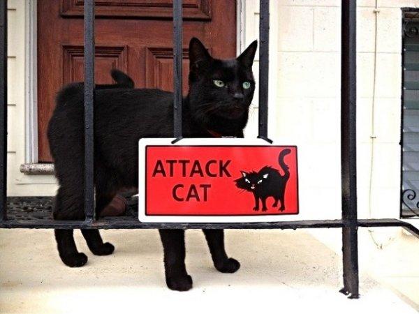 Картинки с котами и про котов