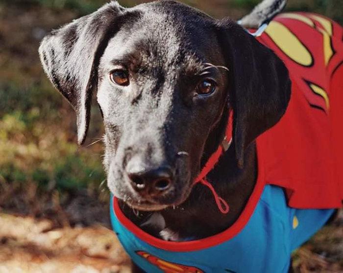 Пожилая женщина недолюбливала бездомного пса, а он спас ей жизнь