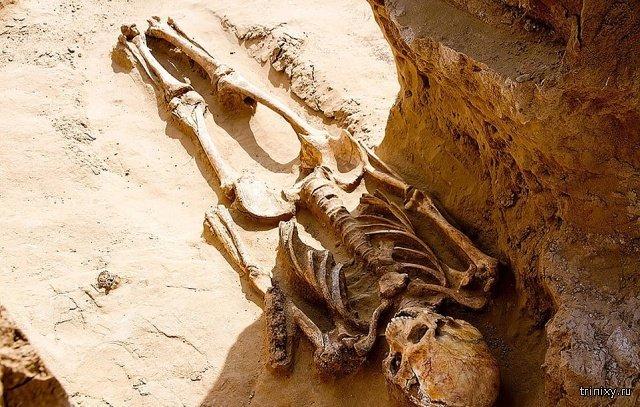 Астраханский фермер нашел древнее захоронение и драгоценности на своем земельном участке (14 фото)