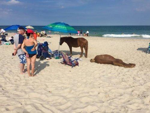 Пляжные будни в прикольных картинках (24 фото)
