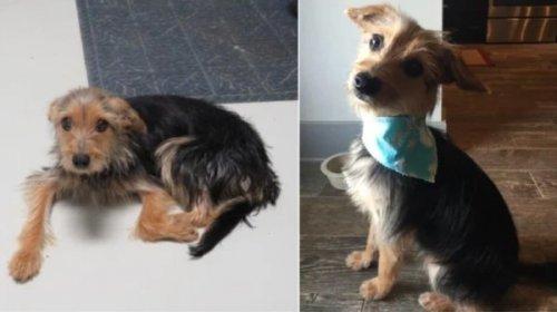 Чудесные животные до и после того, как обрели дом и любящих хозяев (29 фото)
