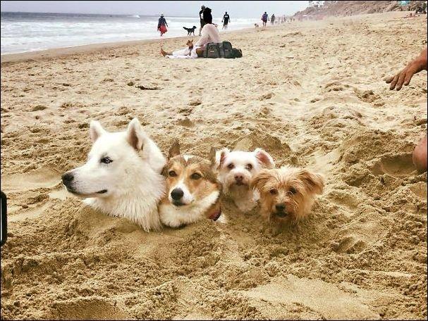 Пляжный юмор