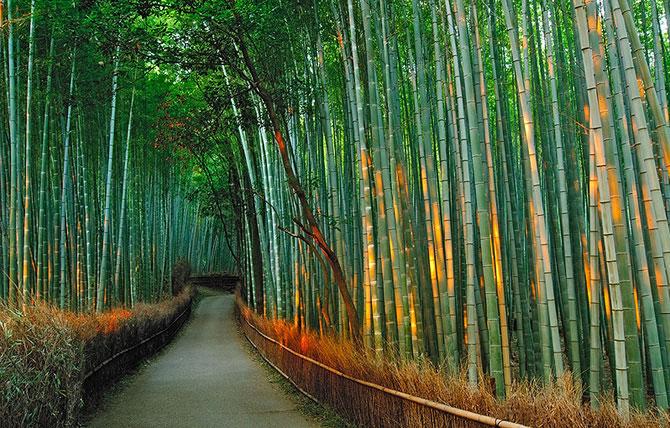 Бамбуковый коридор (17 фото)