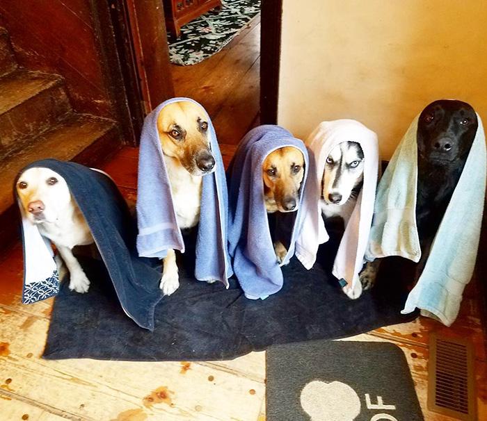 Четвероногое счастье: на что похожа жизнь, когда в доме больше двух собак