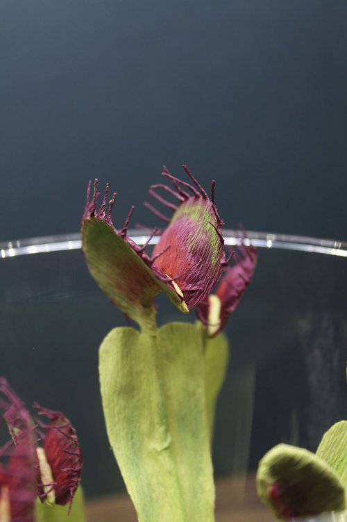 Реалистичные бумажные скульптуры насекомых и не только (24 фото)