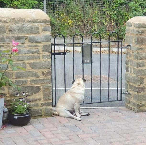Это Уолтер, и он терпеливо ждет… (4 фото)