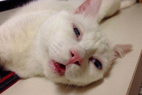 Кошка с самой смешной мордахой во время сна (19 фото)