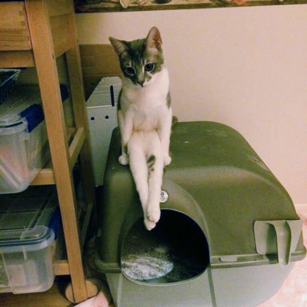Коты уже почти научились сидеть по-человечьи