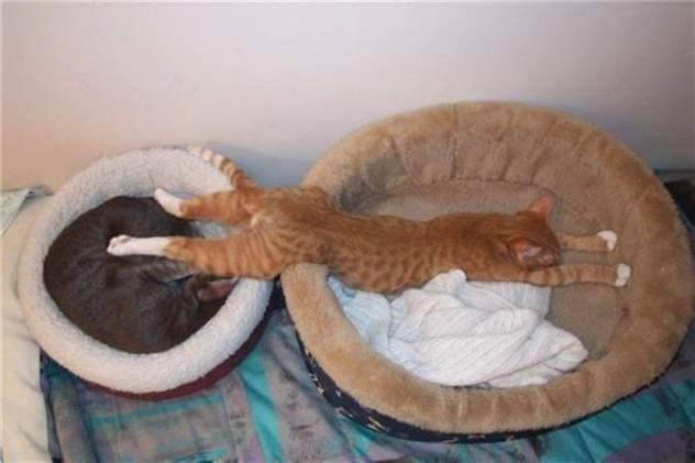 15 котов, которые плевать хотели на вашу логику ( 16 фото )
