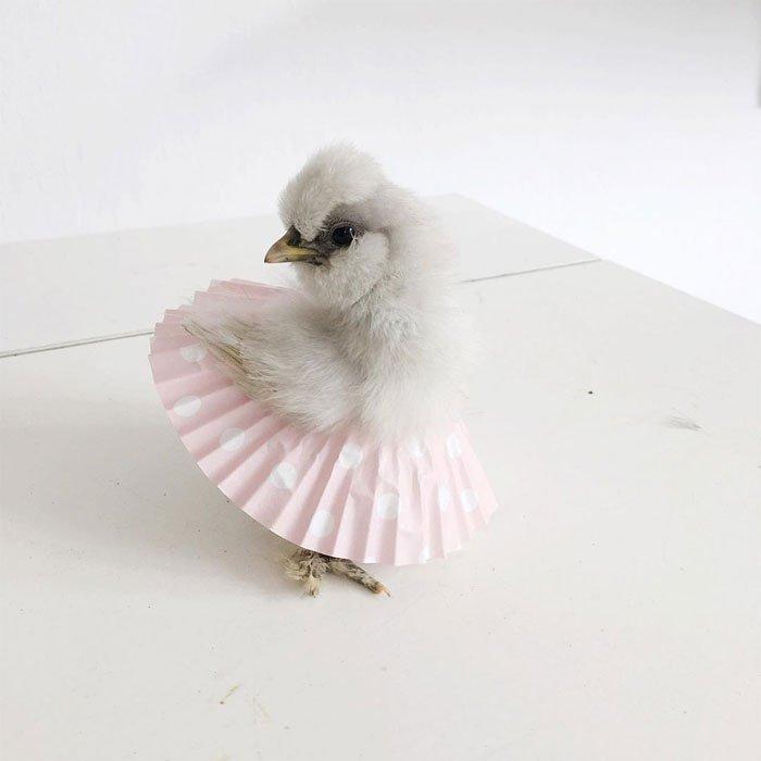 Цыпочки в балетных пачках