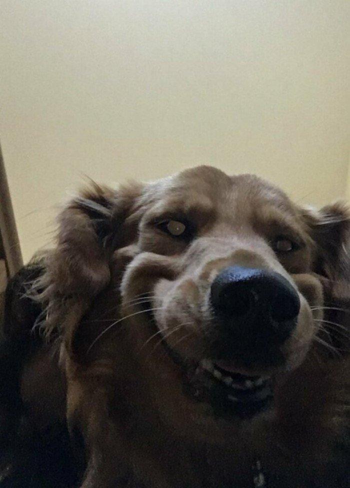 20 смешных снимков домашних животных