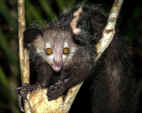 ТОП-25: Жуткие животные, в существование которых вы не поверите