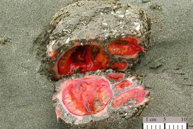 Ужасы природы: живой камень ( 4 фото )