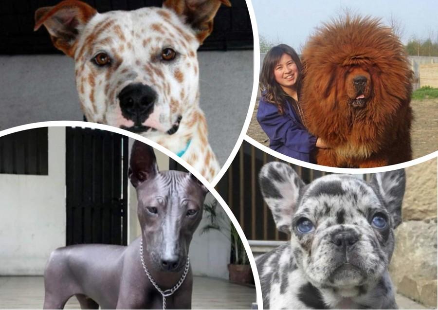 20 страшно милых и необычных &171;инопланетных&187; собак