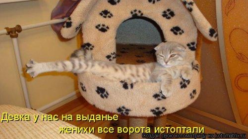 Лучшая котоматрица недели (37 фото)