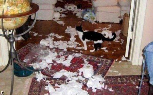 Заведи себе кошку, говорили они. Кошки привносят в дом уют, говорили они… (10 фото)