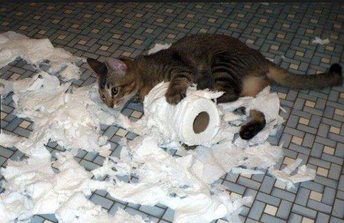 Заведи себе кошку, говорили они. Кошки привносят в дом уют, говорили они... (10 фото)
