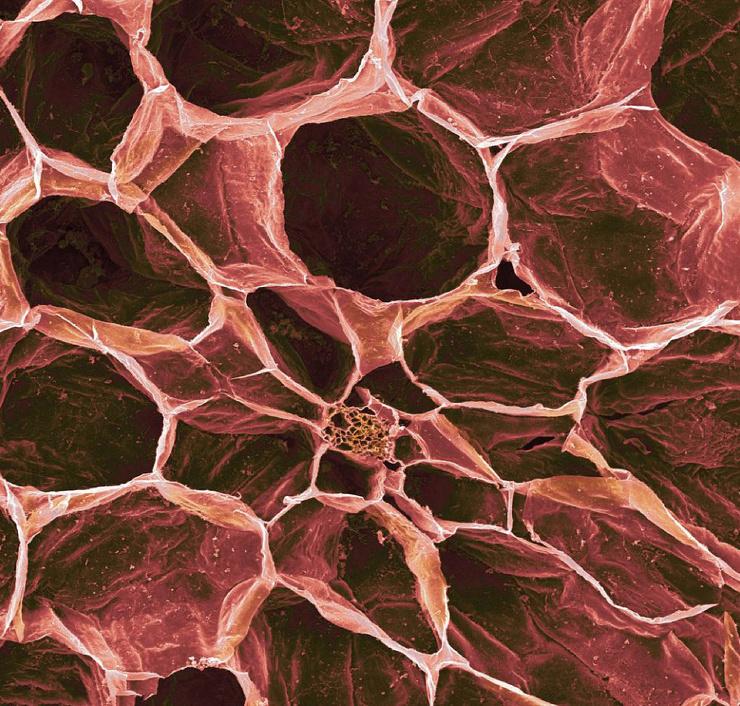 Еда под микроскопом │ 17 фото