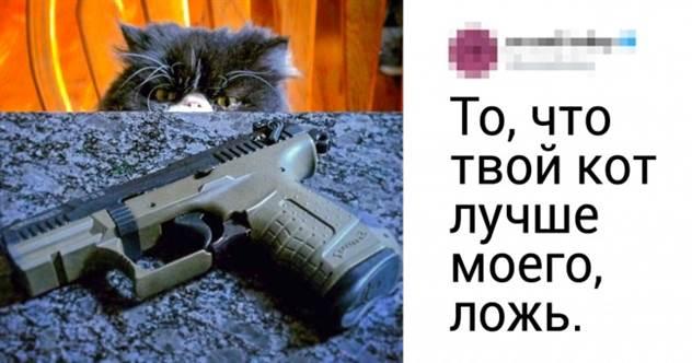 В твиттере спорят о том, чей кот самый крутой. Ваш любимец тоже должен поучаствовать ( 20 фото )